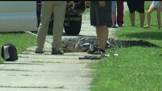 Man attacked by alligator while bathing in pond