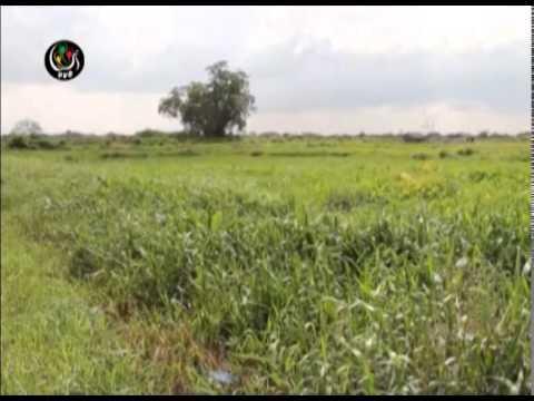 DVB - သိမ္းဆည္းခံ လယ္ေျမမ်ား ျပန္လည္ရယူဖုိ႔ ၾကန္႔ၾကာေန