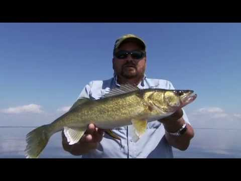 Mercury - Lead Core Walleye
