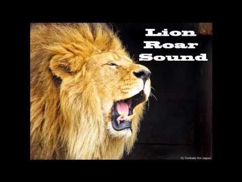 lions roaring audio