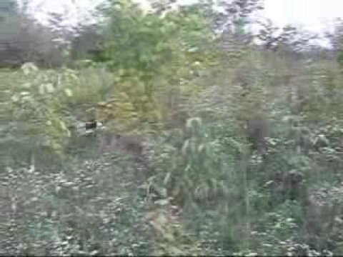 Rabbit Hunting Video
