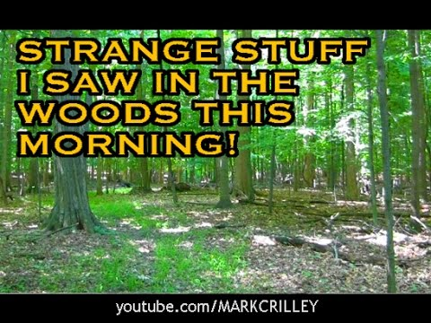 Strange Stuff I Saw in the Woods This Morning!