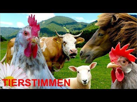 Für kleine Kinder: Bauernhoftiere mit Naturgeräuschen, ganz ohne Musik! Tierstimmen Video Tiere