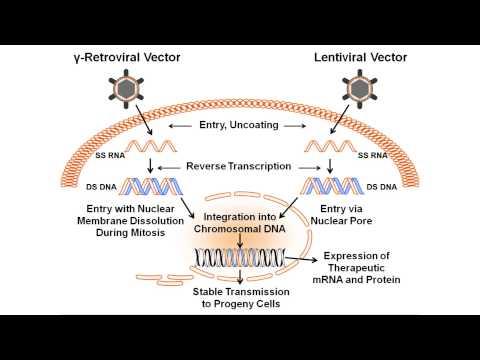 β-globin gene transfer in human bone marrow for sickle cell disease