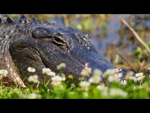 Brazos Bend State Park Part 2 - Alligator Etiquette