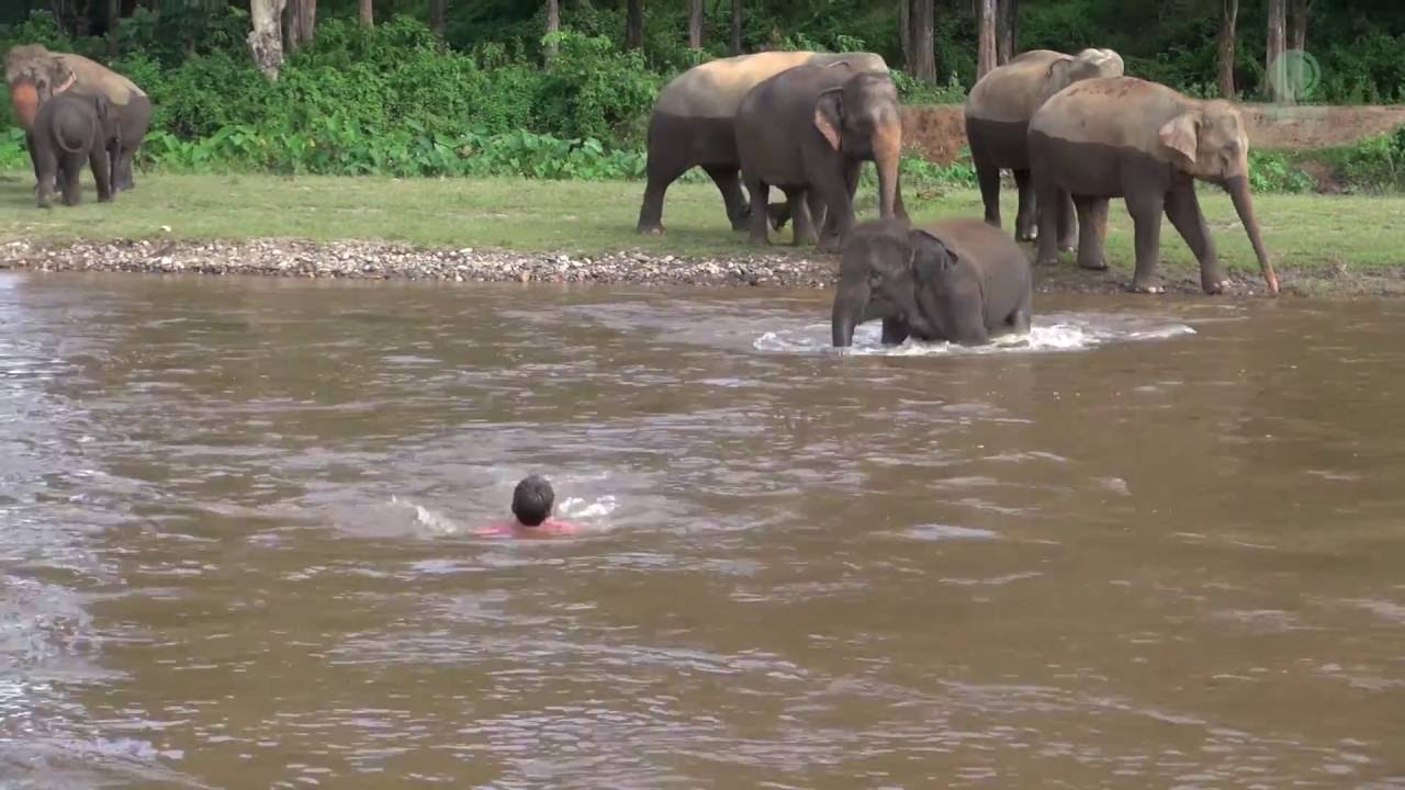 [This Elephant Should Be In The Coast Guard] Video