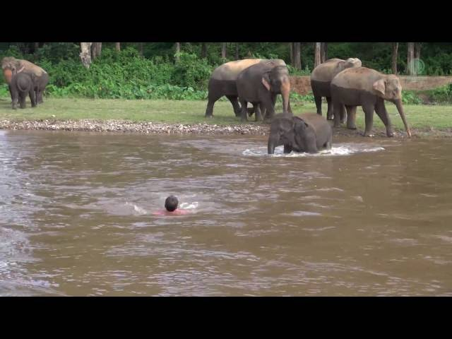 Elephant Comes To Rescue Man In River -