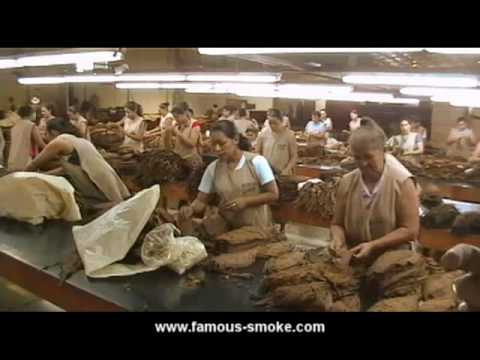 A Short Tour of the El Paraiso Cigar Factory (Honduras)