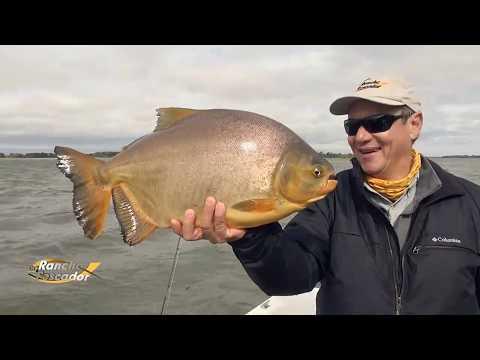 Pescaria De Pacu E Piapara Na Argentina - Bloco 2