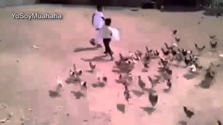 Niño Es Atacado Por 100 Gallinas Asesinas, Videos De Risa 2013, Videos Chistosos
