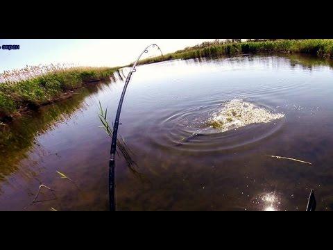 Ловля щуки. Разведка по щучьим местам. Ловля щуки в траве.  Pike fishing