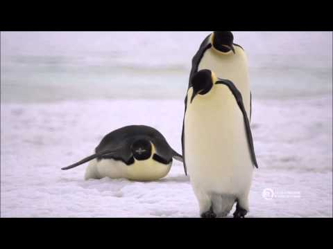 Antarctica Expedition Cruise with Emperor Penguins