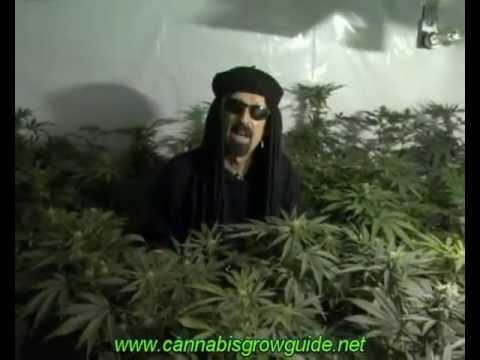 Jorge Cervantes Ultimate Grow DVD 1 Part 1 - Learn How To Grow Marijuana