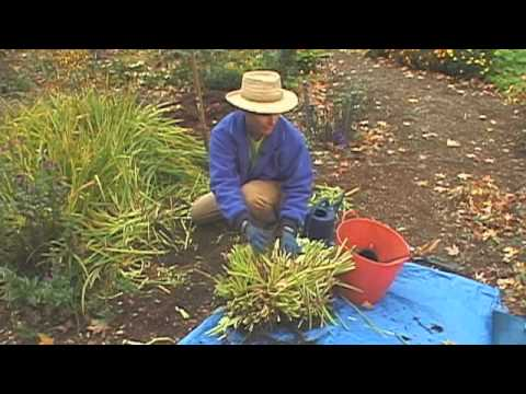 Dividing Perennial Flowers