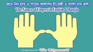 The Names of Fingers in English & Bangla