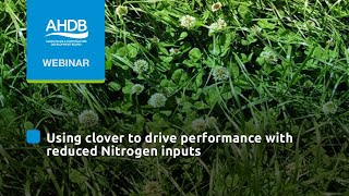 Using clover to drive performance with reduced N inputs