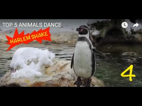 Harlem Shake Animals Funny
