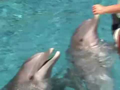 dolphins pearl tricks