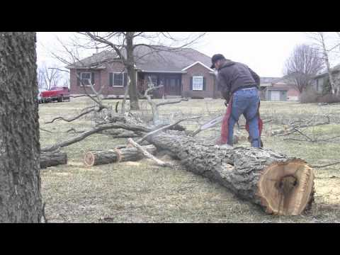 Stihl MS261 Chainsaw Falling. Bucking. & Limbing