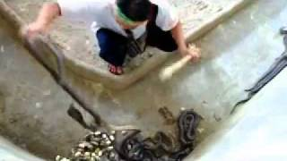 snake attack,funny snake keeper