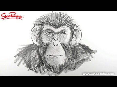 Caesar Monkey Drawing How to Draw a Monkey From The