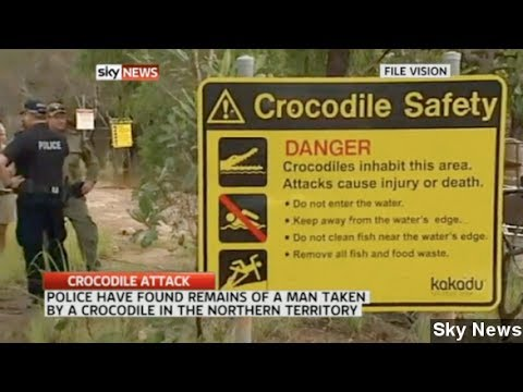 Human Remains Found In Australian Crocodile After Attack