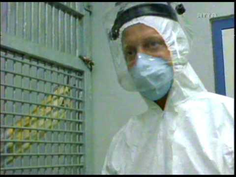 Chimpanzés dans le couloir de la mort - 4/6 - Chimps on death row
