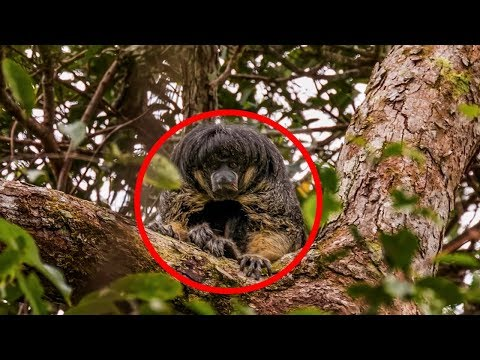 5 Mysterious Creatures Caught in South America!