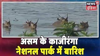 असम के काजीरंगा नेशनल पार्क में बारिश ने मचाई तबाही, जानवरों को भी है  परेशानी