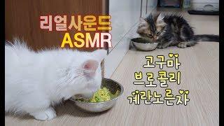 고양이먹방 리얼사운드 ASMR 사랑스런 먹방영상 근접촬영(no talking) Lovely video that cats eat delicious おいしく食べる愛らしい猫のビデオ