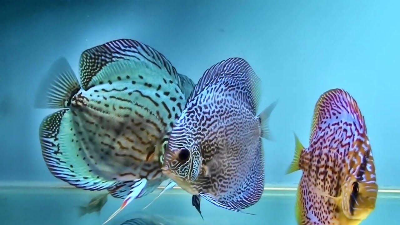 Aquarium DVD  Tropical Reef Aquarium  Filmed In HD