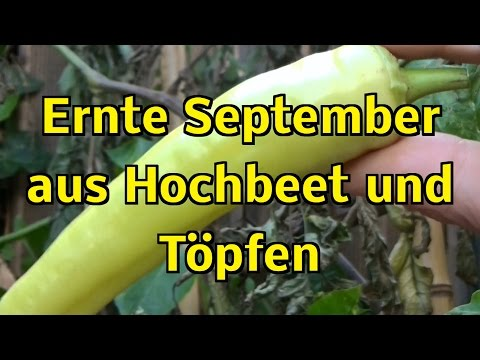 Ernte Haul Im Kleinen Selbstversorger Garten Aus Hochbeet Und Töpfen ! September