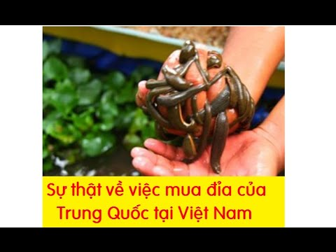 Sự thật về việc mua đỉa của Trung Quốc tại Việt Nam