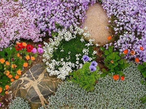 Очиток в саду и их дизайн фото