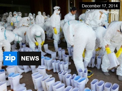 4,000 Chickens Culled Over Bird Flu Outbreak - Dec 17, 2014