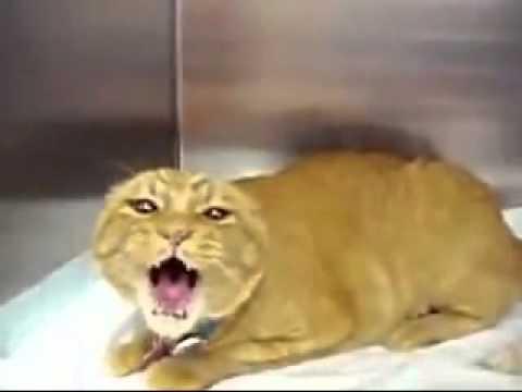 Ну очень голодная кошка!!!