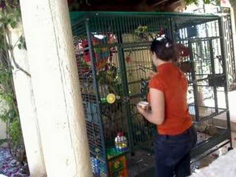 Pet Squirrel Monkeys playing Video