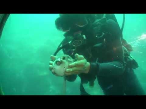 Cebu Yellow Submarine | Mactan Island Philippines