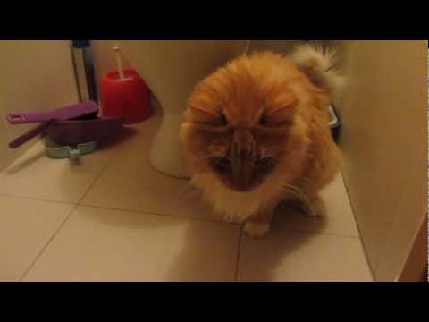 how to make a cat behave