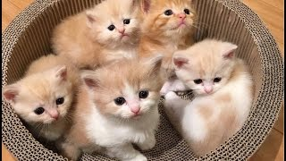 Adorable Cats Compilation - Most Beautiful Cats In The World #2