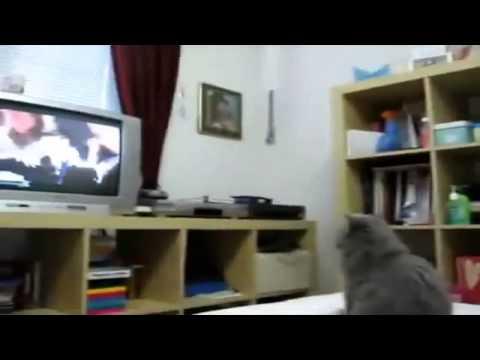 Подборка прикольных животных Часть 1. Funny animals