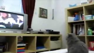 Подборка прикольных животных Часть 1. Funny animals