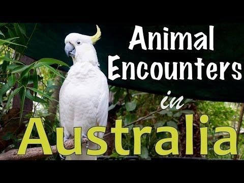 Australian Animal Encounters on Magnetic Island