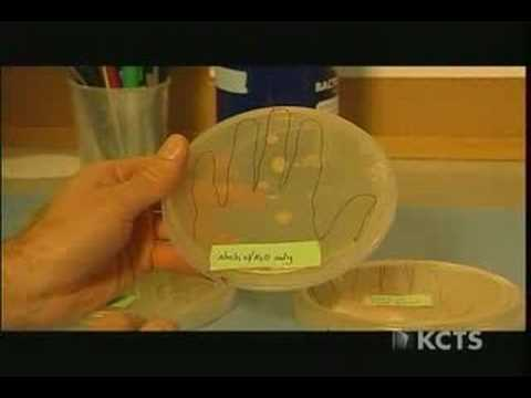 Bill Nye - Anti-Bacterial Soap versus Regular Water