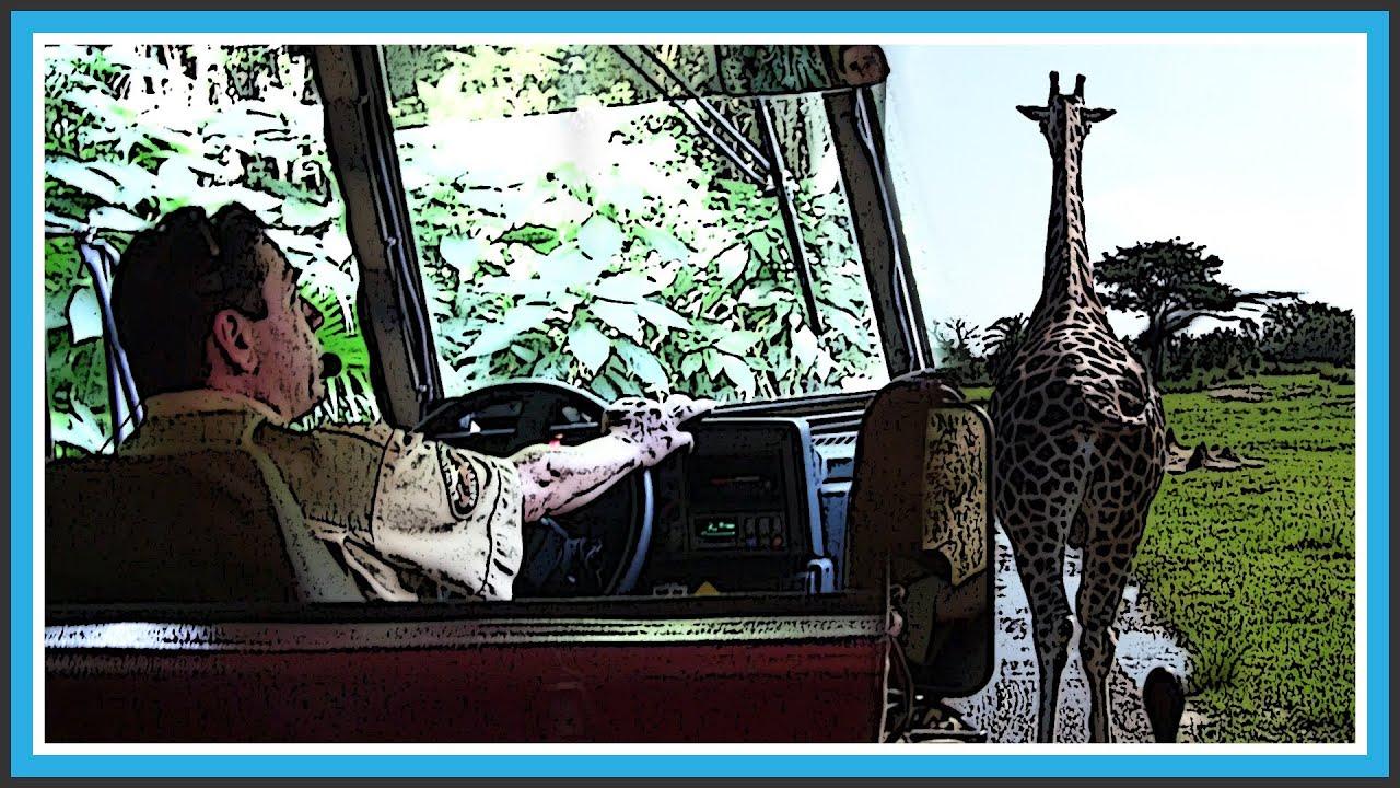 hd 1080p   best tour guide   kilimanjaro safari at animal kingdom