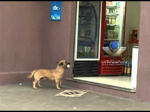 Cão esperto aprende a trocar latinhas por pão