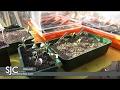 S3/Ep4: Flower Sprouts & Mushroom Update | SEAN