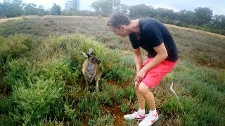 Perth, the Kangaroo Capital?