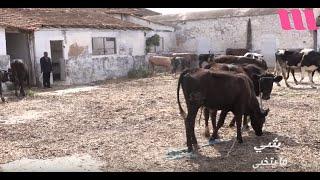 شيء ما يتخبى: أخطر ملفات التهريب 4000 رأس بقر يهرب شهريا للجزائر