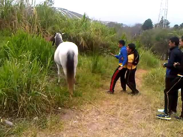 video gracioso caballo